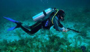 Los Mejores Trajes De Buceo Para Pesca Submarina