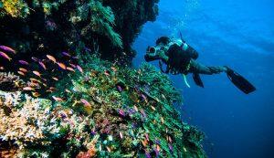 Los Mejores Lentes Para La Fotografía Submarina